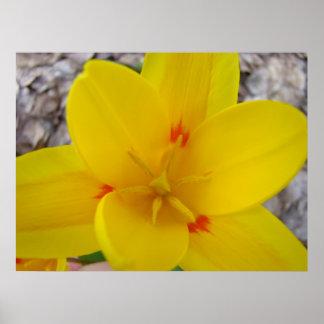 Toile d'impression d'art du jardin 2 de tulipe poster