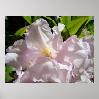 Toile ensoleillée rose florale d'impression d'art  affiche