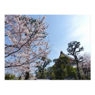 Tokyo-Kirschblüten Kirschblüte Postkarte