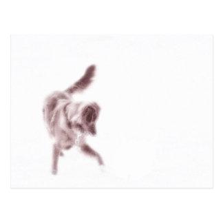 Toller-Tanz Postkarte