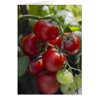 Tomaten im Garten Karte