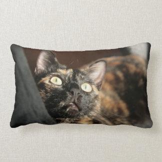 tortie cat pillow lendenkissen