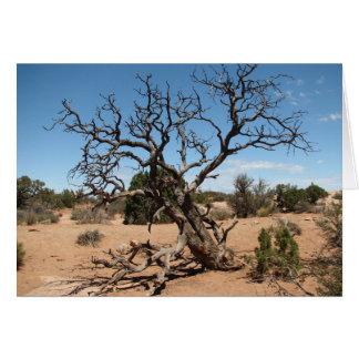 Tote Utah-Wacholderbusch-Baum-Karte Karte