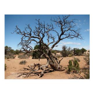 Tote Utah-Wacholderbusch-Baum-Postkarte Postkarte