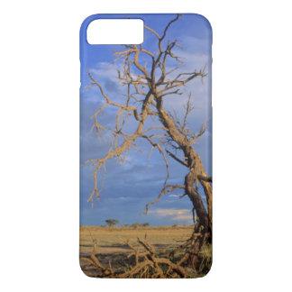 Toter Baum des Kamel-Dornen-(Akazie Erioloba) iPhone 8 Plus/7 Plus Hülle
