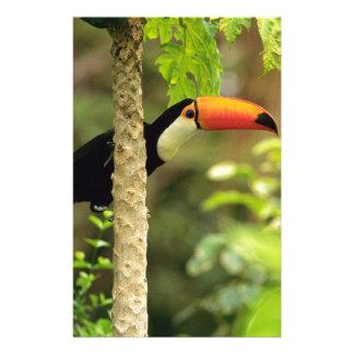 Toucan Vogel Briefpapier