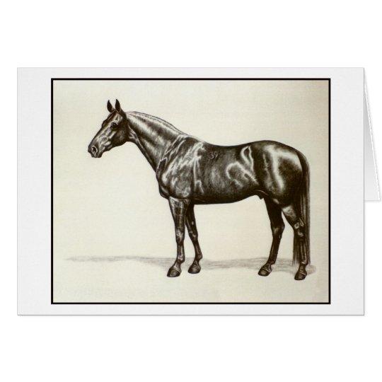 Trakehner Stallion Grußkarte
