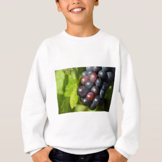 Trauben auf Rebe Sweatshirt