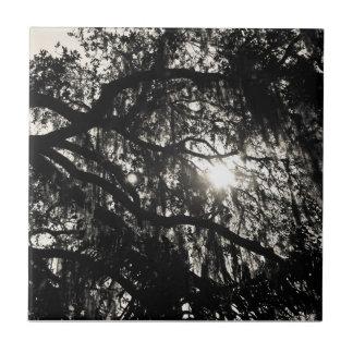 Träumen unter der Eichen-Schwarzweiss-Fliese Kleine Quadratische Fliese