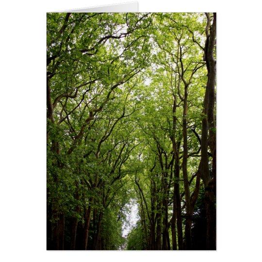Treetops Grußkarte