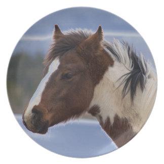 Tri Farbiges Pferd Essteller