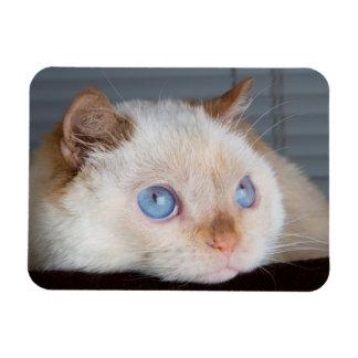 Trident der Katzen-Magnet 06 Magnet