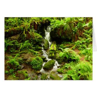 Trillium fällt am Rotholz-Nationalpark Karte