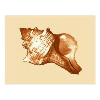 Tritonshorn-Muschelskizze - braun, Weiß und Tan Postkarte