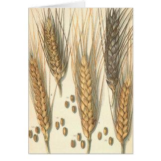 Trockenfeste Weizen-Pflanze, Vintage Grußkarte