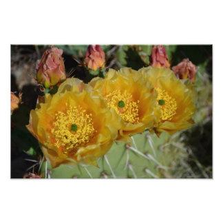 Trois fleurs jaunes de cactus impressions photo