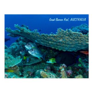 Tropische Fische der Korallenmeer-Postkarte Postkarte