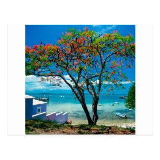Tropische Insel-tropisches Entweichen Bahamas Postkarte