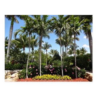 Tropische Kokosnuss-Plantage Bonita Springs Postkarte