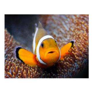 Tropische Rifffische - Clownfish Postkarte