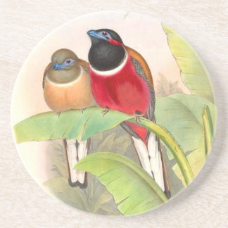 Tropische Trogan Vogel-Tier-Tiere Getränkeuntersetzer
