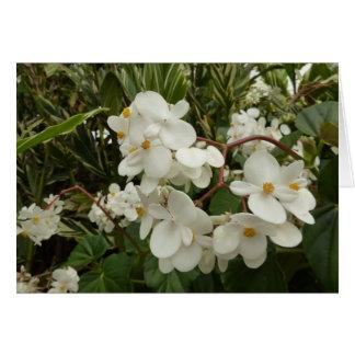 Tropische weiße Begonien-Blumen Karte