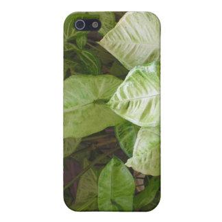 Tropischer Foilage iPhone4 Fall Hülle Fürs iPhone 5