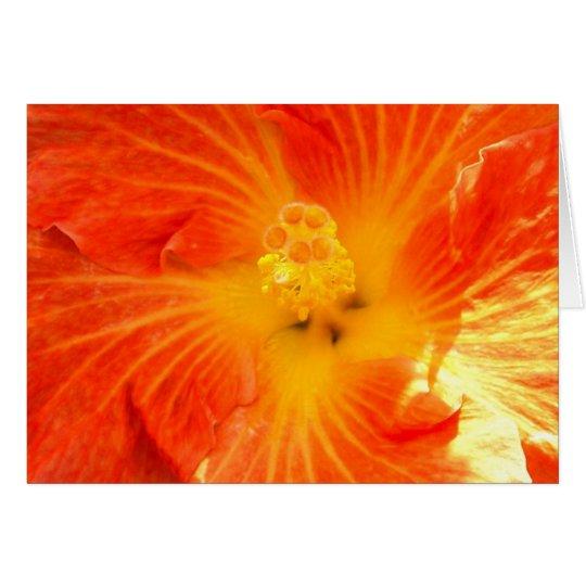 Tropischer orange Hibiskus Karte