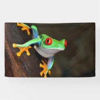 Tropischer Red Eye-Frosch - Agalychnis Callidryas Banner