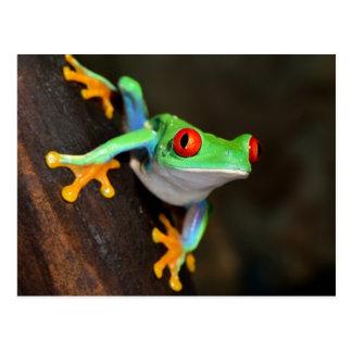Tropischer Red Eye-Frosch - Agalychnis Callidryas Postkarte
