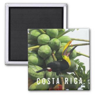 Tropischer Toucan Andenken-Magnet Costa Ricas Quadratischer Magnet