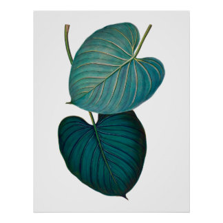 Tropisches exotisches Philodendron-Blätter Poster