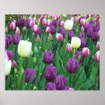 Tulipes de ressort affiches