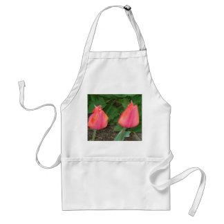 Tulipes de rose du tablier DSC04465