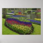 Tulipes, jacinthe de raisin, et jonquilles, affiche