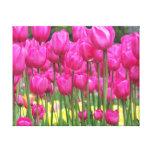Tulipes roses toile tendue