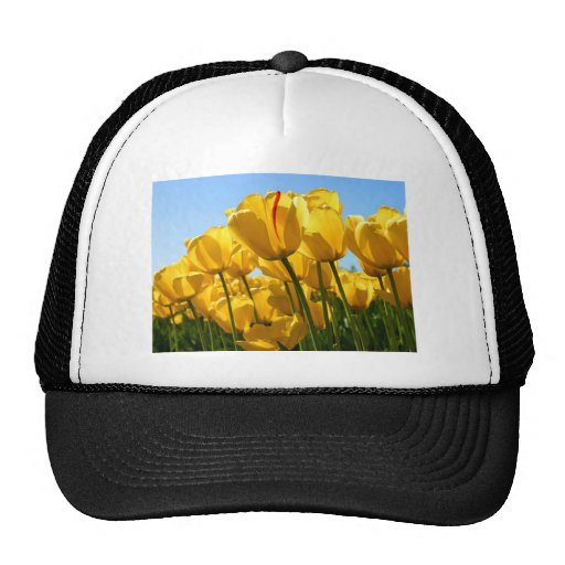 Tulips.jpg Netz Caps