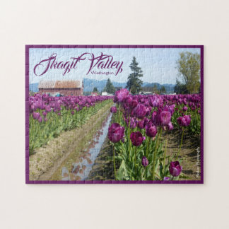 Tulpe-Felder (lila) u. Scheune (Skagit Tal)