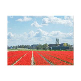 Tulpefelder im Holland-Leinwanddruck Leinwanddruck
