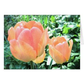 Tulpekarte Mitteilungskarte