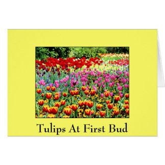 Tulpen an der ersten Knospe Karte