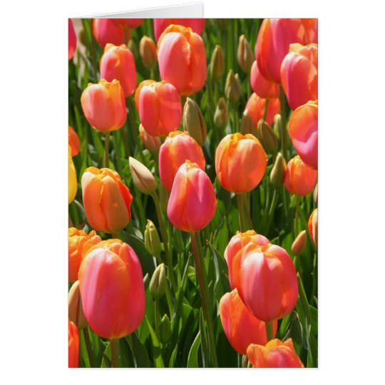 Tulpen Grußkarte