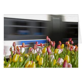 Tulpen im Stadtesprit Karte