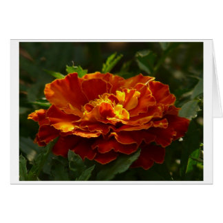 Türkische Ringelblume Grußkarte