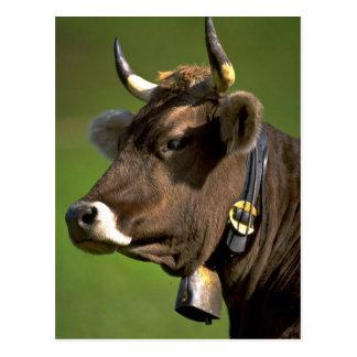 Typische Kuh Postkarte