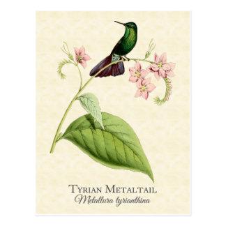 Tyrian MetallSchwanz-Kolibri-Vintage Kunst Postkarte
