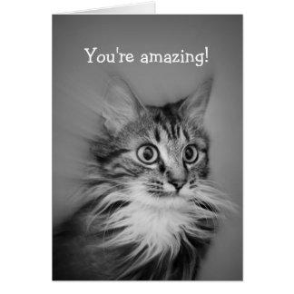 Überraschte Katze mit Hals-Kampfläufer-alles Gute Karte