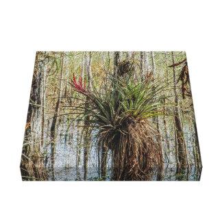 Überraschung im Sumpf - ein Bromeliad auf einem Leinwanddruck