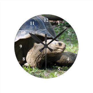 Uhr Galapagos-Schildkröten-586