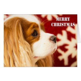 Unbekümmerte Weihnachtskarte König-Charles Karte